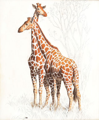 ARTHUR SARNOFF - TWO GIRAFFES ILLUSTRATION ORIGINAL ART