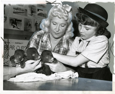 NEWS PHOTO: FEEDING BEAR CUBS - DETROIT (1958)