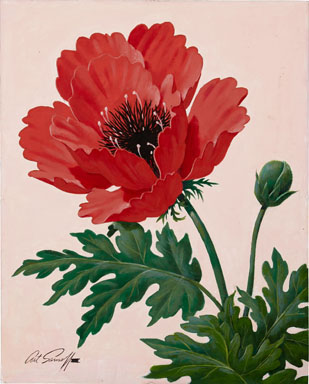 ARTHUR SARNOFF - RED POPPY ILLUSTRATION ORIGINAL ART